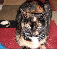 Is Your Pet Cat Overweight