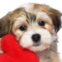 Knowing What The Best Quality Dog Food For Allergies May Just Save His Life!