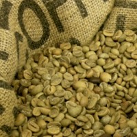 Learn Where to Buy Green Coffee Beans And Reasons For Buying Them