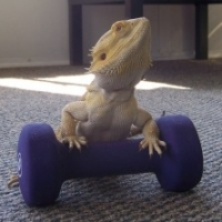 Lessons Learned From A Bearded Dragon Owner
