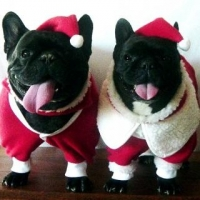 Make the Holidays Merry for Your Pets