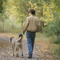Man\'s Best Friend May Be Best Medicine