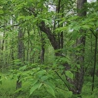 Maybe the Trees Can Keep it Simple; The Use Of Medical And Scientific Language In Social Roles