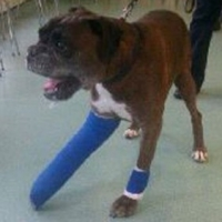 Medical Insurance For Your Dog