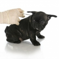 Microchip Your Dog  -  5 Reasons