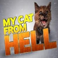 My Cat From Hell Review