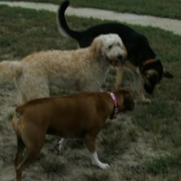 My Dog Knows The Way To The Dog Park!