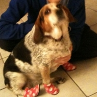 My Dog Wears Shoes