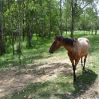 My Horse Training Stories : Horse Trail Ride From Hell !