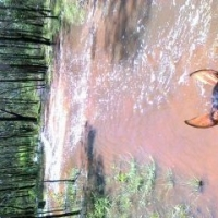My Horse Training Stories : Horse Trail Riding Good And the Bad