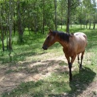 My Horse Training Stories : Used Horse Saddles