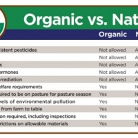 Natural And Organic Foods Coupled With A Wheat And Gluten Free Diet