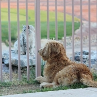 Natural Remedies for Dogs With Leukemia