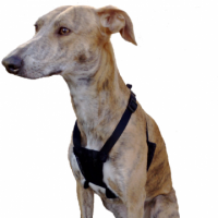 No Pull Dog Harnesses  -  Should You Get One?