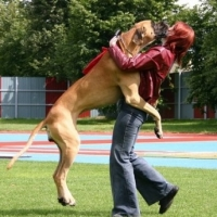 Noisy Neighbourhood Dogs?  -  How to Training Your Neighbours Dogs