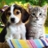 Non  -  Anesthesia Teeth Cleaning for Your Pet