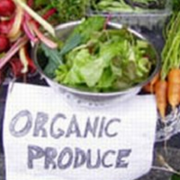 Obnoxious Organics: Does Buying Organic Foods Up Your Obnoxiousness Quotient?