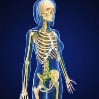Osteoporsosis  -  Our Bones Our Health