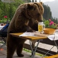 Out Of Control Bears Spread Terror Across the Country
