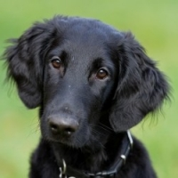 Paper training your dog: How to do it and common problems