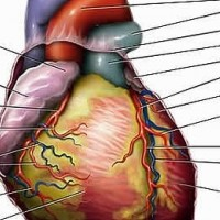 People Who Have Survived Heart Attack at A Higher Risk for Ptsd
