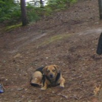 Planning on Camping With A Dog?
