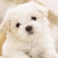 Potty Training Your Puppy In Less Than A Week