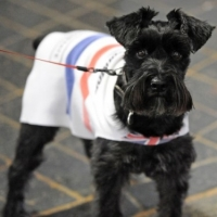 Preparing Your Pets for the Winter – It\'s Going Get Cold