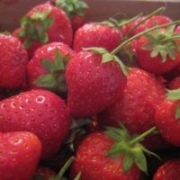 Preserving Strawberries for Your Food Storage