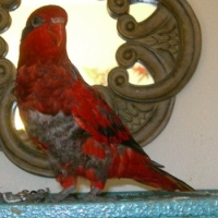 Rescue And Adoption Of A Needed Parrot