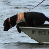 Selecting a Search and Rescue dog
