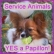 Service Animals  -  A Papillon
