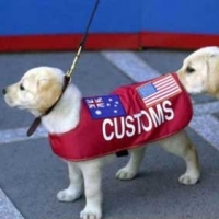 Sniffer Dogs – A Follow Up Story