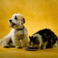 Some Common Diet Problems In Dogs You Never Knew Before