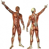 Study Shows That Protein And Calcium Play A Crucial Part In Lean Muscle And Weight Loss