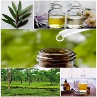 Tea Tree Oil Acne Treatment: Your Natural Secret Weapon In The Fight Against Acne