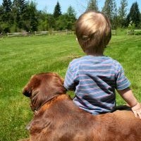 Teaching Your Pet And Your Kids To Live In Harmony