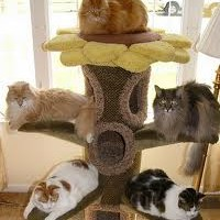 The Benefits Of Investing In A Cat Tree
