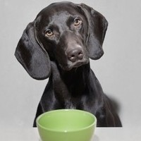 The Best Option For Hypoallergenic Nutrition