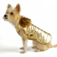 The Dog Clothing Debate: Who Really Needs It and Why?