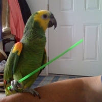 The Reality of Parrot Training