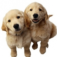 The Scoop on Pet Scams Craiglist