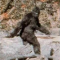 The Search for Bigfoot