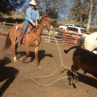 The Tale Of Two Calf Ropers