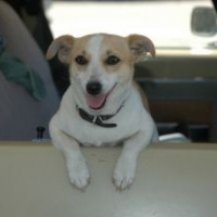 Tips for Travelling With Your Dog