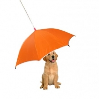 Tips to Choose Best Dog Accessories