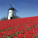 Top Attractions In Holland