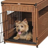 Training Your Dog With A Crate