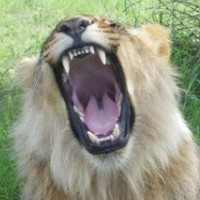 Trophy Hunting And Hunting Safaris