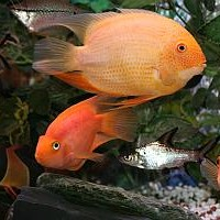 Tropical Fish Tanks for Beginners